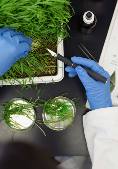 close up photo of a biology lab experiment